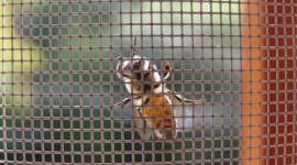Rolo i fiksni komarnici